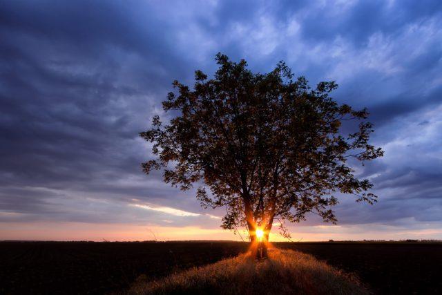 Shining through by Norbert Fritz